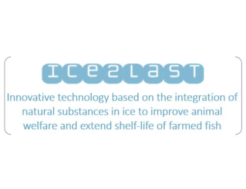 ICE2LAST -FASE 1